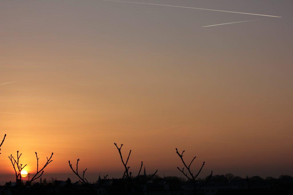 Baumkrone mit Sonne und Kondensstreifen, Hoheluft-Ost (2011)